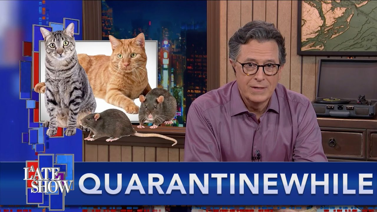 Quarantinewhile... Chicago Gambles On Cats To Rid The City Of Rats
