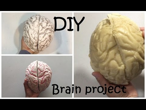How to Make a Brain Project DIY Brain  #42