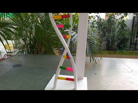 How to make DNA model with thermocol