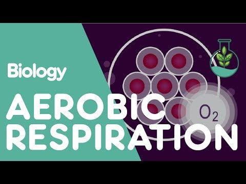 What Is Aerobic Respiration? | Biology for All | FuseSchool