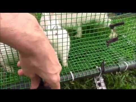 Mesh gate to stop Rabbits getting wet and dying