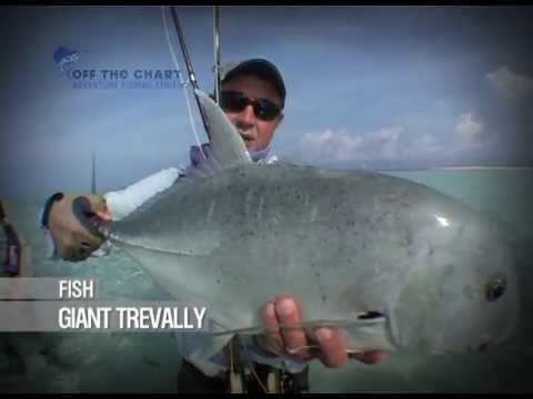 Giant Trevally: Fly Fishing the Flats: Seychelles