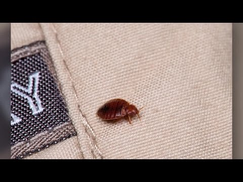 How to Search a Hotel Room for Bedbugs