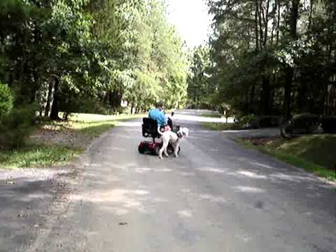 Service Dog Scooter Training 101