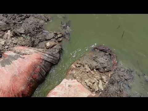 Draining the crawfish pond  2