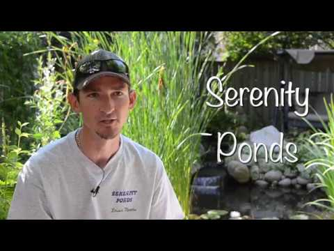 Brian Moore of Serenity Ponds