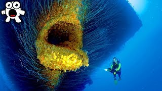 Top 10 Mysteries Of The Marine Depths