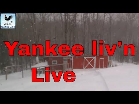 Nor'easter Quinn Hits Yankee Livn in Maine