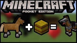 Easiest And Fastest Way To Tame Horse In Minecraft Pe 0150 Mcpe Pocke