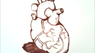 Human Heart Drawing For Kids