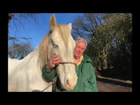 A tribute to Roly - legendary horse, partner and friend - Barry Hook, Horse Drawn Promotions