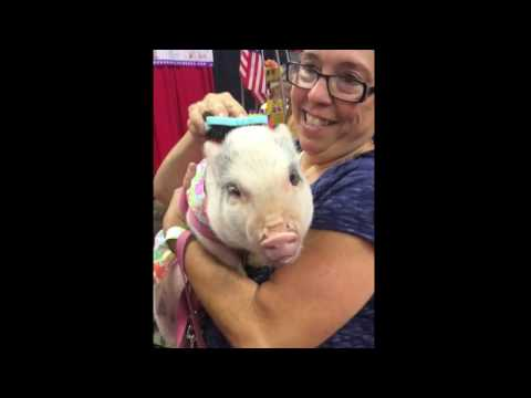 Pigs Need BendiBrush Loving Too