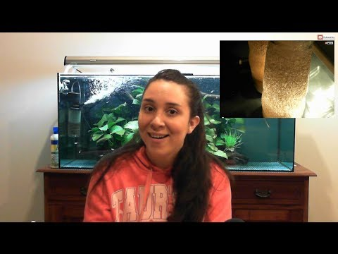 Part 1: Hatching Brine Shrimp / Artemia for Aquarium Fish Fry