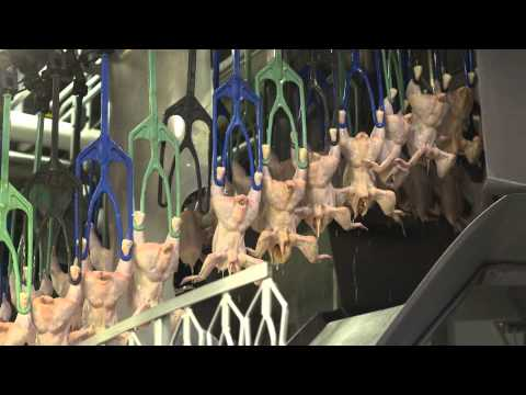An Inside Look at U.S. Poultry Processing