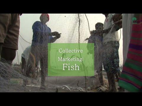 Collective Marketing: Fish