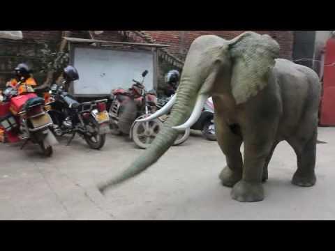 Elephant costume 04
