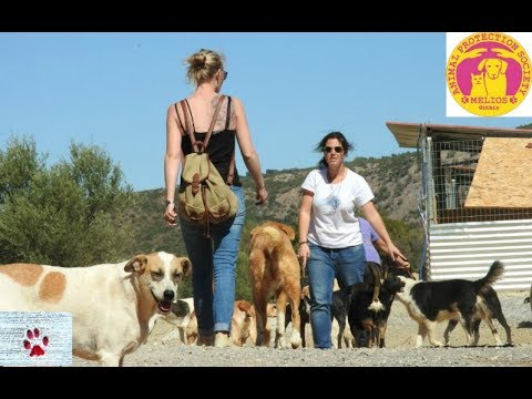 One shelter, three women, 200 dogs - rescuing in Mani, Greece