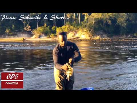 Sheepshead Fishing with Fiddler Crabs