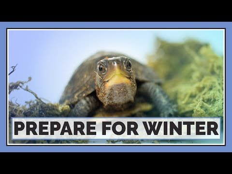 Are Your Reptiles Ready for Winter?