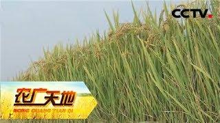 《农广天地》 20180206 种植稻茬麦 老杨有高招 | Cctv农业