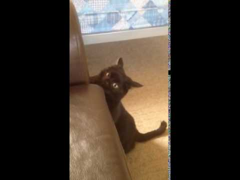 Loki's fight with the leather sofa