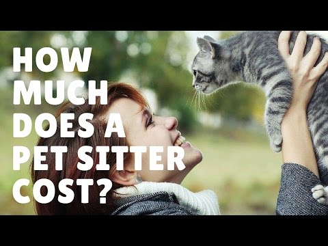 How Much Does A Pet Sitter Cost?