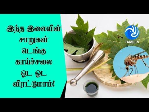 இந்த இலையின் சாறுகள் டெங்கு காய்ச்சலை ஓட ஓட விரட்டுமாம்! Dengue Fever Treatment - Tamil TV