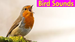 BIRD PICTURES with Sounds and Names in English
