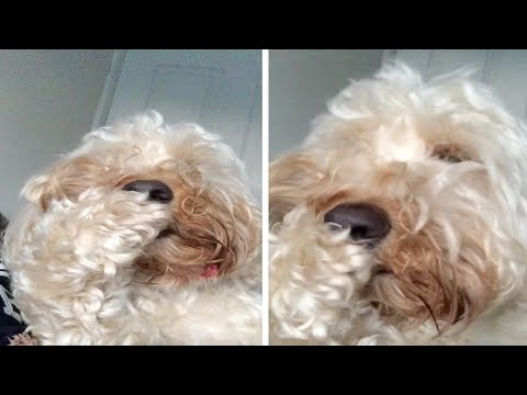 Dog Bites Own Nails Like A Human