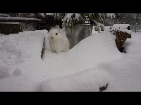 Bunnies Play In The Snow