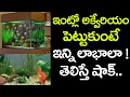 We Must Have a FISH Aquarium at Home and Office | Best Tips in Telugu | VTube Telugu