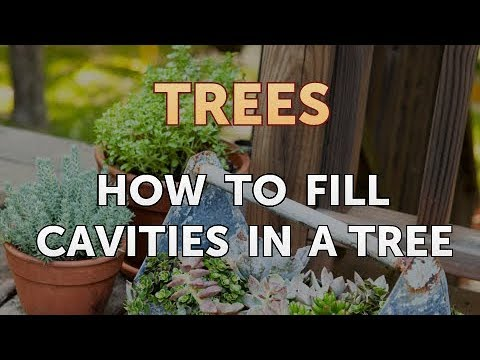 How to Fill Cavities in a Tree