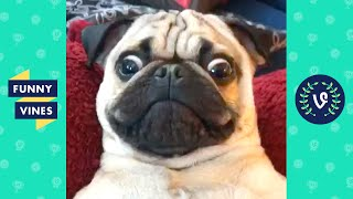 TRY NOT TO LAUGH - Funny Dogs