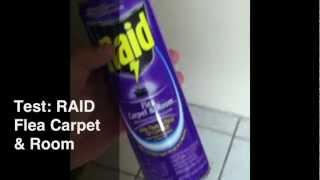 How To Kill Fleas
