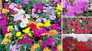 Ganapathiplackel Garden / nursery Farm visit near Elikkulam