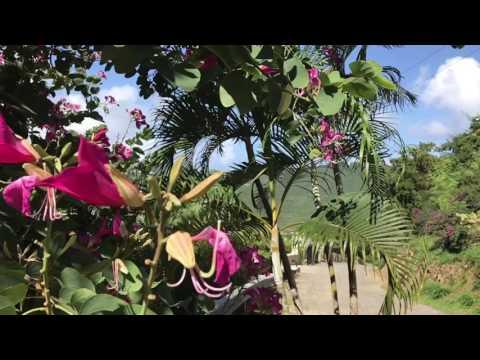 Hummingbirds gather around the tropical shrubs!