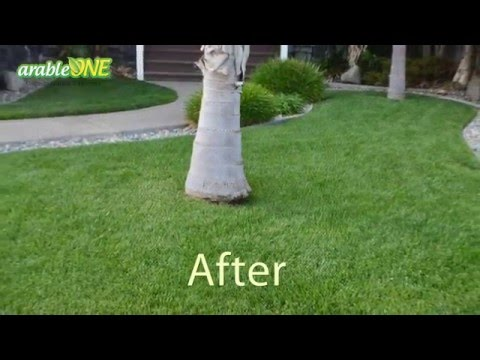 How to grow a lush lawn