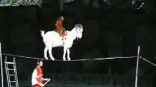A Monkey on a Goat on a Cup on a Tightrope