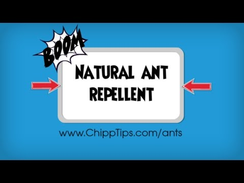 Natural Ant Repellent Recipe | Best Deterrent for Getting Rid of Ants Naturally