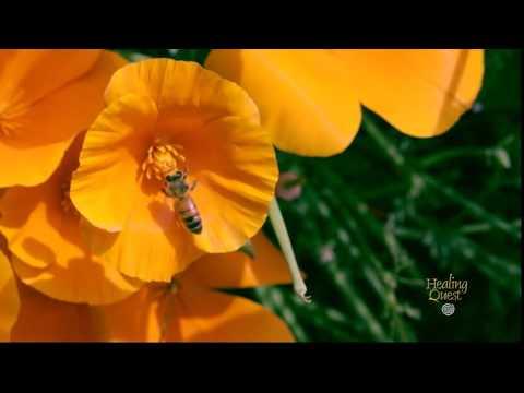 Healing Moment: Bees