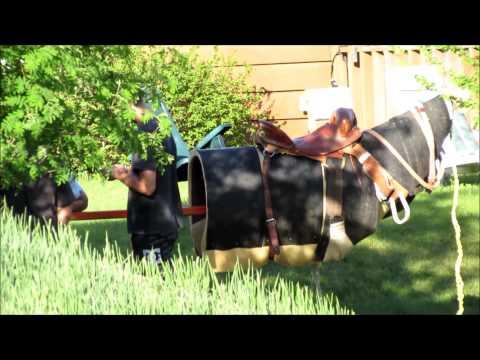 Saddle Bronc Cowboys