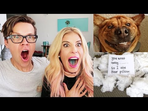 Finally Catching Them!  (Reacting to Funny Pets!)