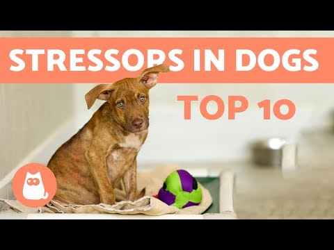 10 Things Which Stress Out Dogs