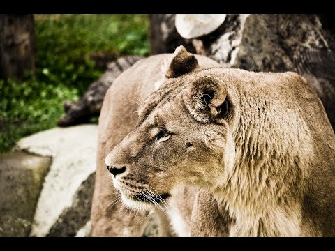 Safari Animals shoot with Canon DSLR Sigma 10 20mmTascam 70D