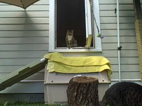 Feral Cats venture outside Part II