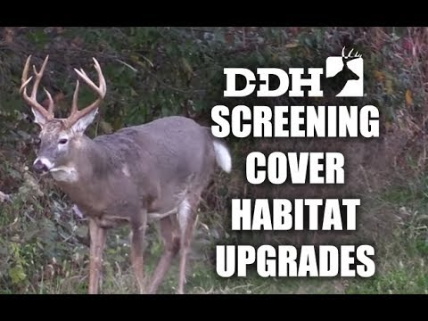 Upgrade Your Deer Habitat With Screening Cover