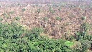 Più 30% in un anno la deforestazione dell