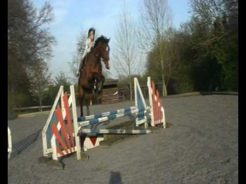 Revel - Jumping and flatwork