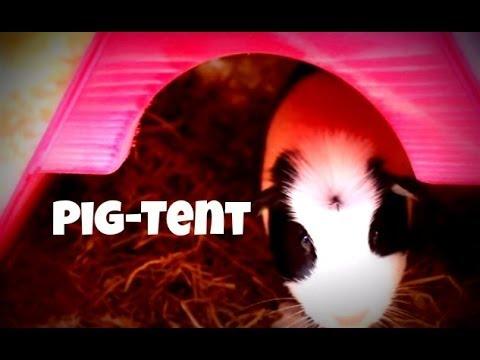 Homemade Guinea Pig House *Pig-Tent*
