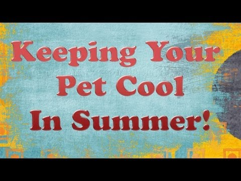 How to keep your rabbits cool in summer! ~Ashley